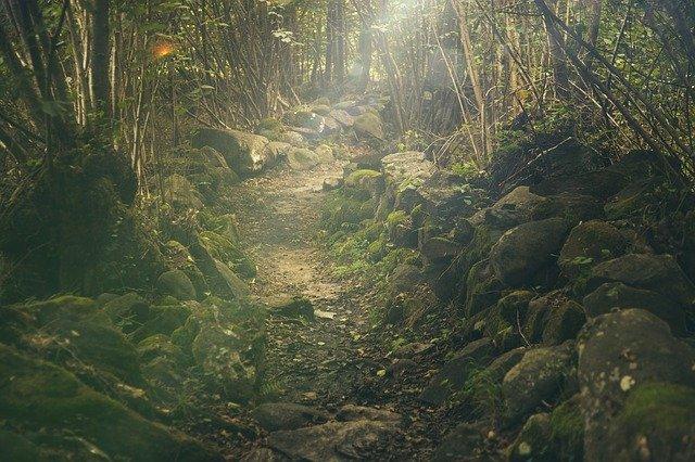 Znaczenie rezerwatów ekologicznych i przyrodniczych